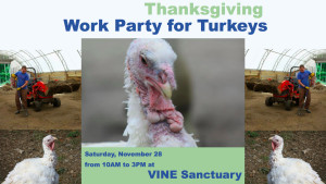 Thanksgiving Work Party for Turkeys