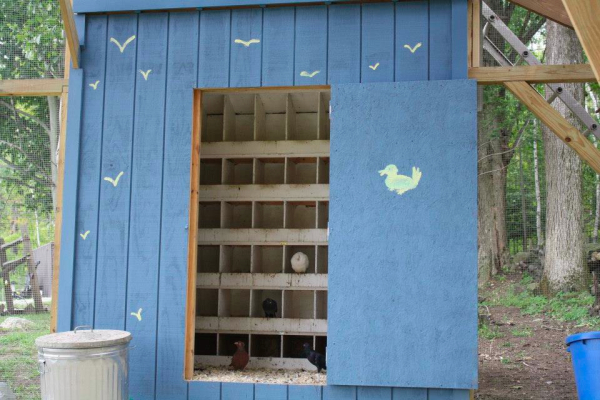 In the coop inside the aviary, nesting boxes mimic the cliff-side hollows in which these birds would naturally nest.